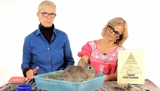 Amy Sedaris and Mary Cotter rabbit care videos for Howcast